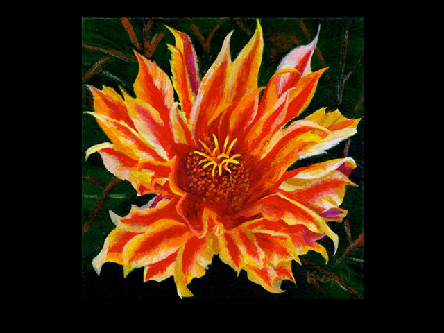 katie fagan graphics paintings-Red Cactus Flower