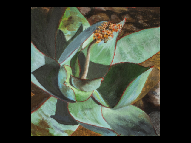 katie fagan graphics paintings-Succulent from my Garden