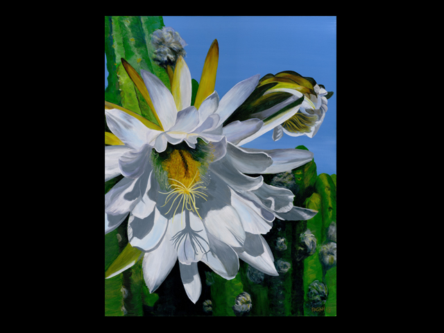 katie fagan graphics paintings-White Cactus Flower Painting in progress, please come back soon!