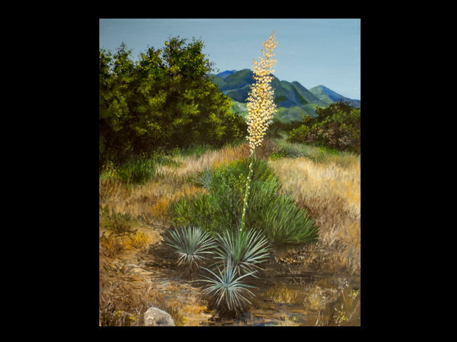 katie fagan graphics paintings-Yuccas in the Ojai Valley
